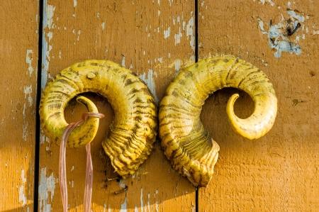animal shadow: A pair of ram s horns Stock Photo