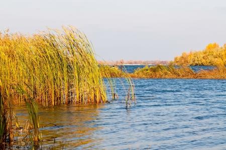the dnieper: Autumn falls on the Dnieper River in Kiev