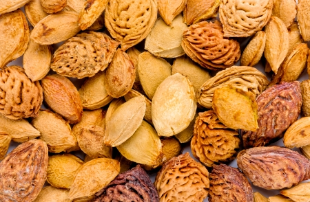 apricot kernels: Plum, peach and apricot kernels seen in a close-up view