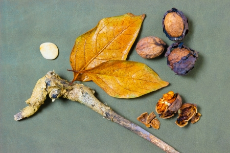 Natural walnut with dried leaves branch and pebble photo
