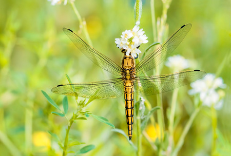 A yellow dragonfly on a flower under the warm spring sun photo