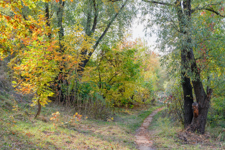 Autumn forest path between maple, oak, willow and poplar trees in a sunny day photo