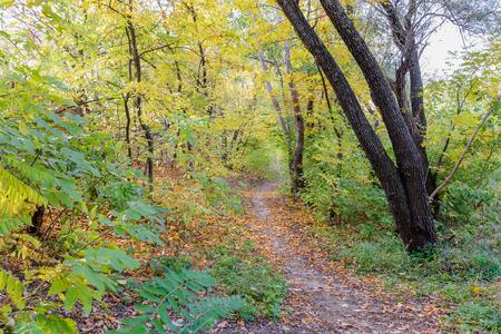 Herfst bos pad tussen esdoorn en populier bomen in een zonnige dag