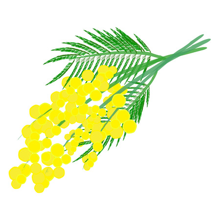 Een mooie gele mimosa tak voor 8 maart, de Women's Day Stock Illustratie