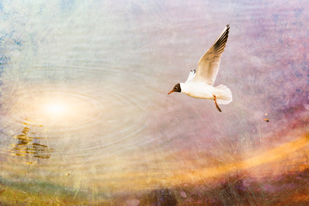 wingtips: A black-headed seagull, Chroicocephalus ridibundus, is flying over the blue waters of the Dnieper river in Kiev the capitol of Ukraine Stock Photo