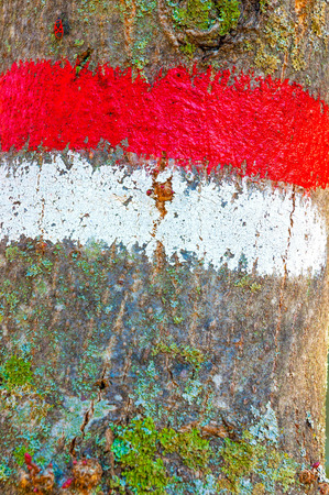 right path: A red and white mark on a tree trunk to indicate the right path to follow during a hiking trip Stock Photo