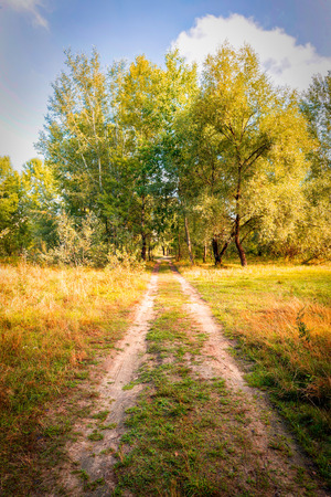 end of the trail: A trail leads to a group of trees. It is the end of summer and the leaves are turning to yellow Stock Photo