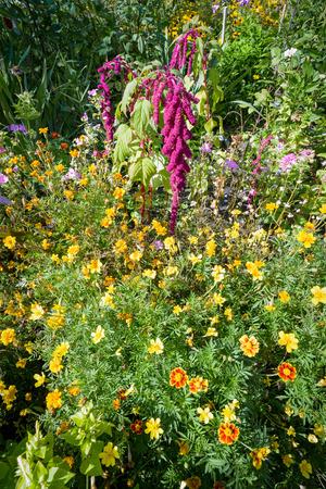 jardines con flores: Varias flores de colores en un jard�n informal bajo el sol caliente del verano Foto de archivo