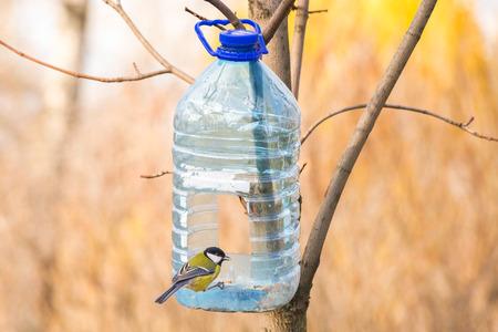 Grote plastic fles gebruikt als voeder voor vogels in de winter. Een geel zwart en wit Koolmees met een zaad in de snavel is neergestreken op het diafragma
