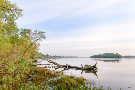 dniper: A quiet view of the Dniper river soon at dawn with poplars, willows and  dead tree trunks Stock Photo