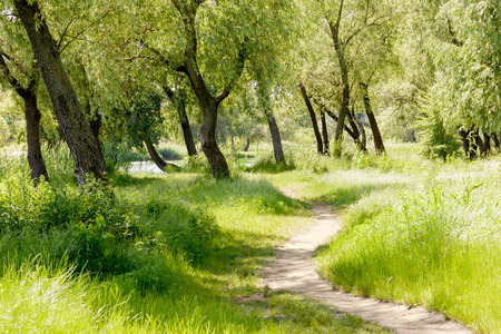 A trail in the park  under the willow trees, close to the lake, during a summer morning