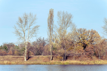 View of trees close to  the Dnieper river in autumn