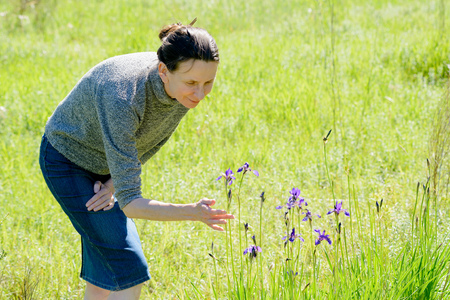 Caucasian adult woman looking a wild iris sibirica flower in the meadow at sunset