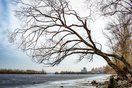 Willow tree over the frozen Dniper river, in winter, in the Obolon district of Kiev, Ukraine Stock Photo