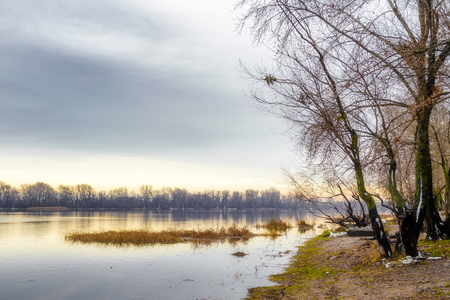 View of  willow trees and poplars close to the Dnieper River in Kiev during a cold and clear winter afternoon