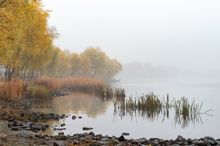 Reeds and trees close to the Dnieper river in Kiev, Ukraine. A soft autumn morning, mist over the cold and calm water. The landscape disappears in the distance