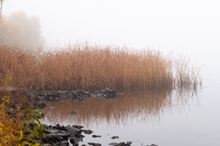 Autumn mist on the Dnieper river, soon in the morning, in Kiev, Ukraine. Reeds and trees emerge from the fog