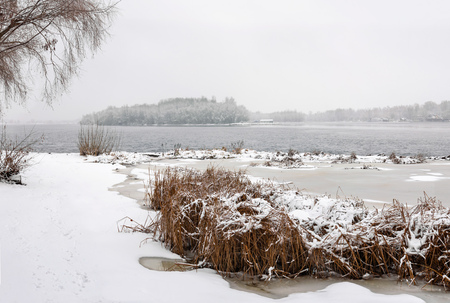Bulrush close to  the Dnieper river during a cold and snowy winter day. The sky is covered by clouds and snow flakes fall softly on the trees and on the ground Stock Photo