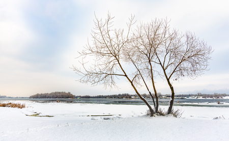 A willow close to the Dnieper river in Kiev, Ukraine, stands out against a background of white snowy winter sky. An island covered by trees appears in the distance