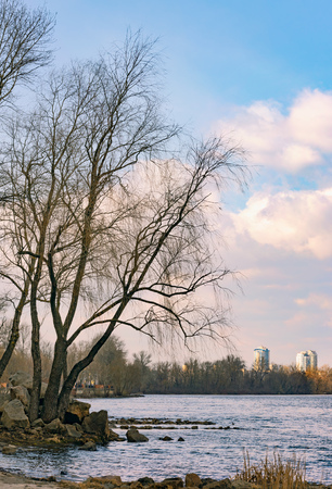 View of  poplars close to the blue Dnieper River in Kiev at the beginning of spring. High buildings in the background.