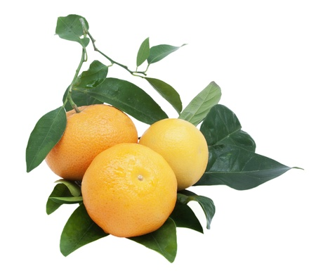 Three ripe tangerines with green leaves, isolated. photo