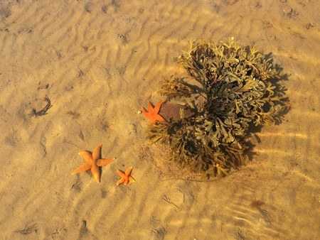 seaweeds: The seaweeds and the algea.