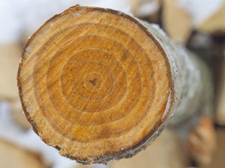 Sección transversal de corte de sierra de un tronco de un álamo. Foto de archivo