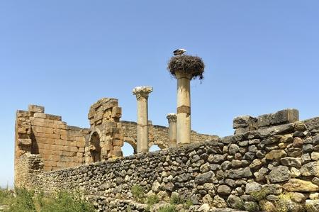 volubilis: Morocco Volubilis ruin