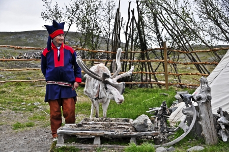belonging: Same with reindeer in the midsummer night at the North Cape  Norway   Northernmost point of Sami settlement is located in Norway Nordkap Das North Cape is on the island province of Finnmark belonging Magery Sami families have their reindeer on the summer
