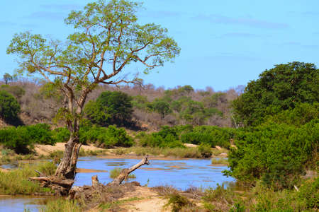 Landscape of the Kruger National Park in South Africa. The Kruger Park is located in the flat Lowveld, the central part at an average height of 250 m above sea level.