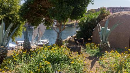 ghetto: Egyptian ghetto, a garden-like entrance to village from sea port Stock Photo