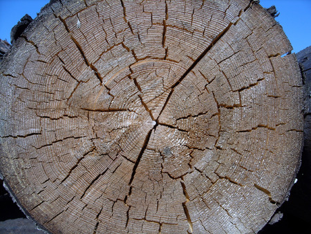 one saw off log, close-up Stock Photo - 1447665