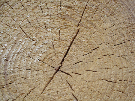 background of one big log close-up Stock Photo - 1447663