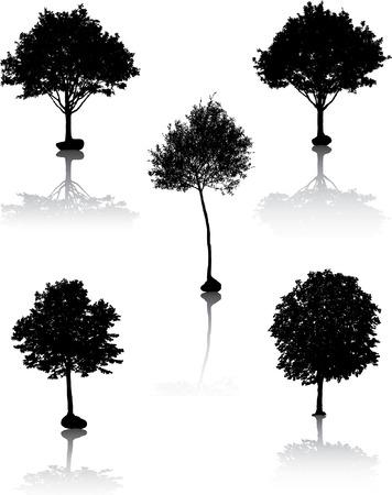 Black tree silhouettes. Vector illustration. Stock Vector - 2142199