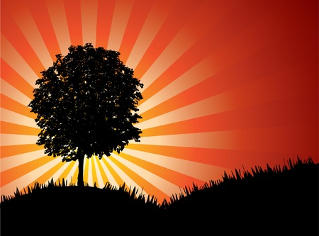 beautiful sunset. High-detailed silhouette of tree. Vector