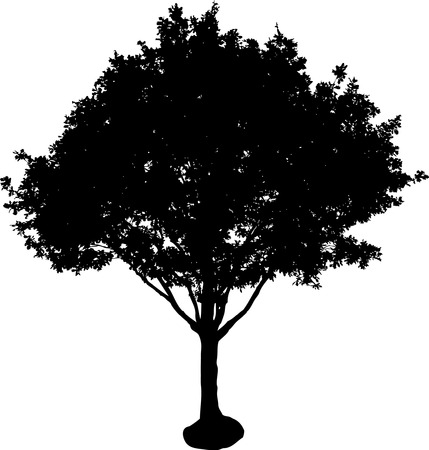 silhouette of isolated tree Stock Vector - 2146462