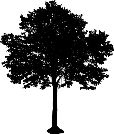 silhouette of isolated tree Stock Vector - 2159641