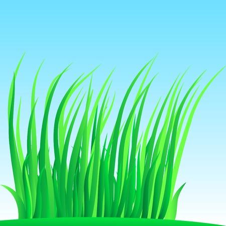 Wisp of grass. Vector illustration.  Stock Vector - 2835509