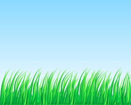 Fresh green grass. Vector illustration. Stock Vector - 2835508