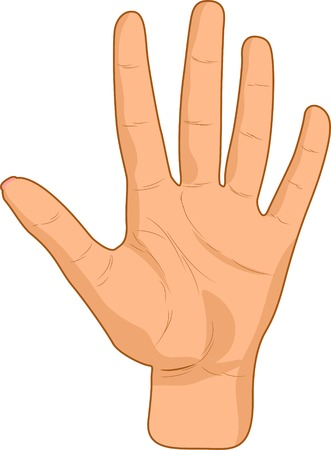 caucasian:  Opened female palm. Vector illustration.