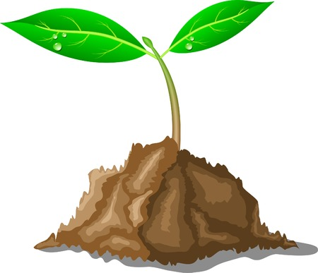 Young sprout in ground. Vector illustration.  Stock Vector - 3531577