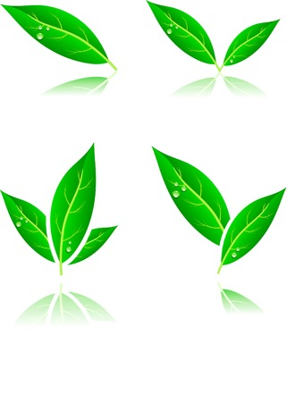 Beautiful leaf icons. Vector illustration. Stock Vector - 3590310