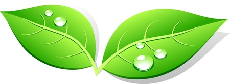 wet leaf: Green leaf icon. Vector illustration.