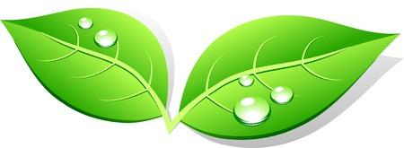 icono ecologico: Icono de hoja verde. Ilustraci�n vectorial.