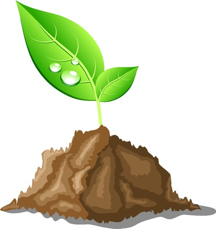 Young sprout in ground. Vector illustration. Stock Vector - 4715815