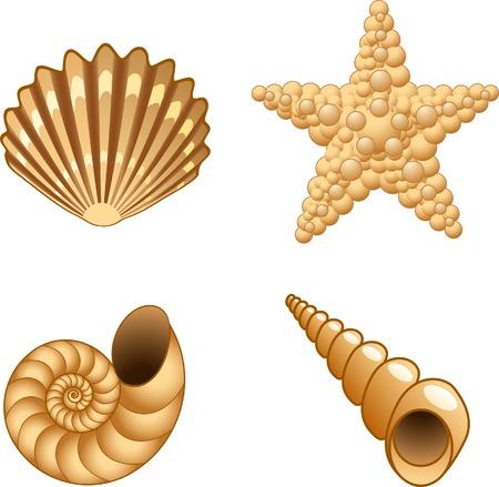 Juego de conchas de mar. Ilustración del vector.