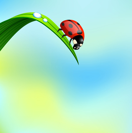 Ladybird sit on grass. Vector. Vector