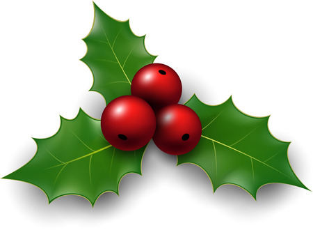 twig: Twig of holly with berry and leaves. Vector illustration.