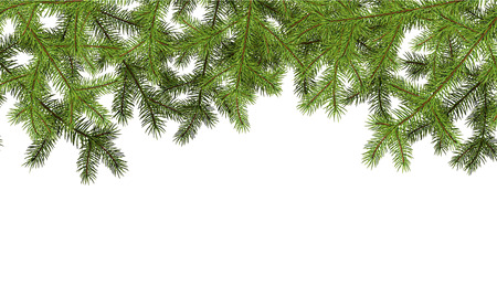 felicitation: White background with fir branches. Vector paper illustration. Illustration