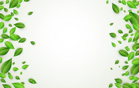 foliage  natural: White background with fresh green leaves. Vector paper illustration.